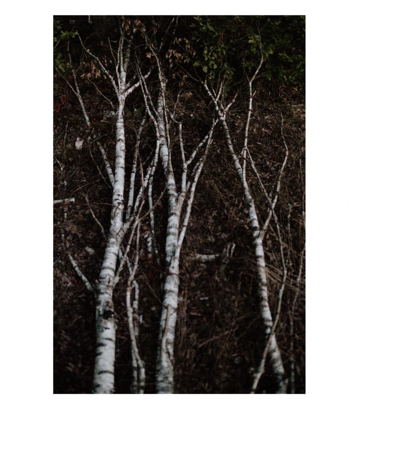 Sesja plenerowa, sesja poślubna w lesie, sesja w lesie, zdjęcia ślubne na pomoście, zdjęcia ślubne nad jeziorem Sesja poślubna w lesie