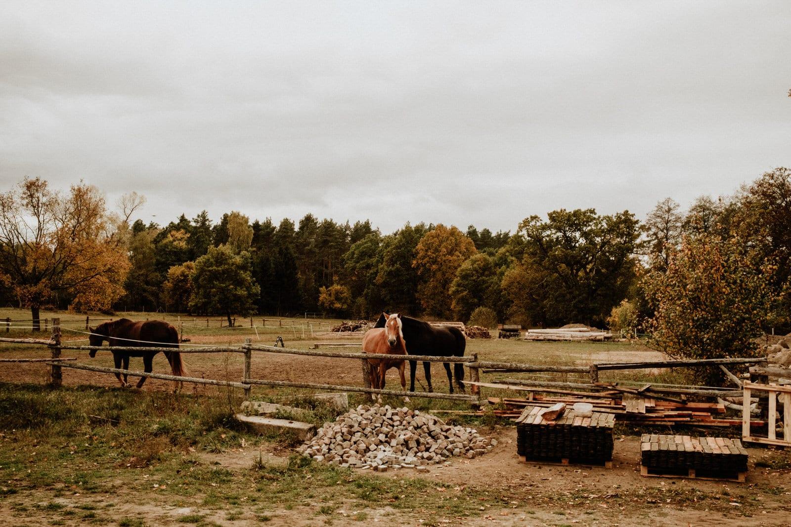 Młyn nad Starą Regą konie